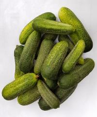 cucumbers (pickled) on stock