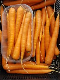 Domestic early carrots on sale