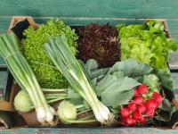 Aktuální nabídka čerstvé tuzemské zeleniny